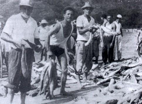 Pesca da tainha. - Imagem: © Arquivo Nenê Velloso